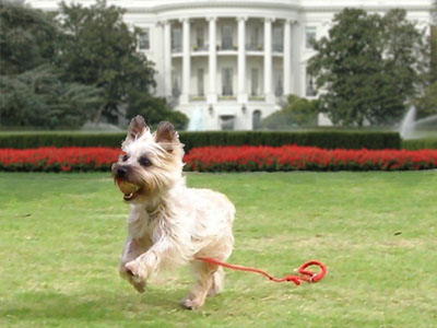 Obama coddling Terriers