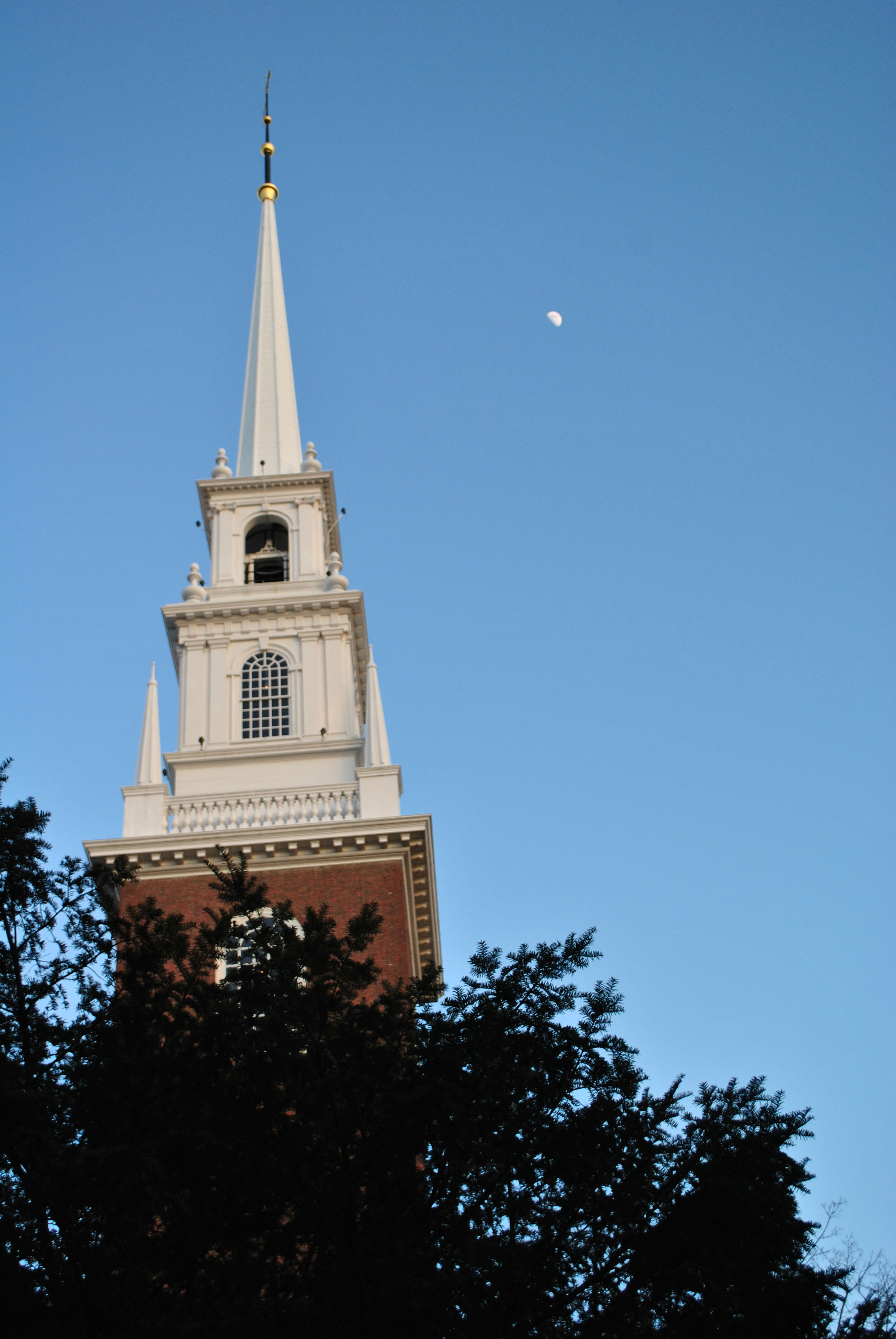 Harvard College Student Blog 183 Squirrel