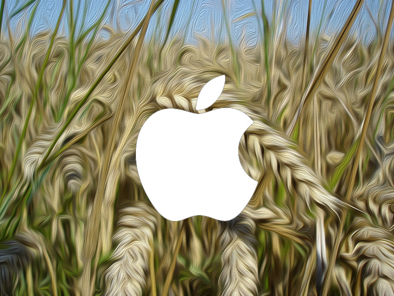 wheat+apple