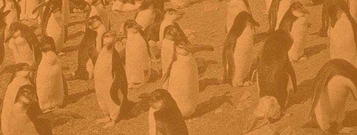 Penguin exits the e-lending scene