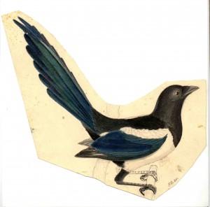 Alexander Wilson's Magpie