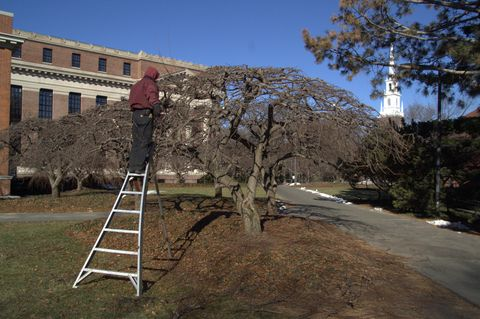 Mark works on the trees on  a winter's day while the students are away.