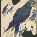 Edward Lear, Blue Parrot (Lear's Macaw), MS Typ 55.9 (22)