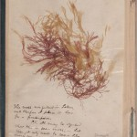 Herman Melville's copy of Hawthorne's Mosses from an Old Manse. AC85.M4977.Zz846h
