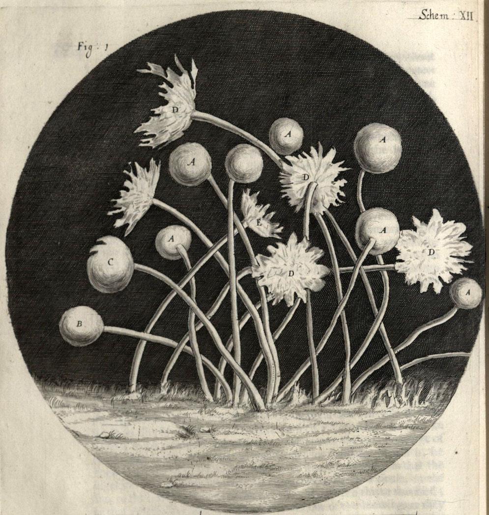 Hooke, Robert. Micrographia. *90W-122F