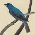 Houghton Twitter logo