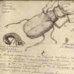 Beetle. Linné, Carl von, 1707-1778. Systema naturae. Nor 2103.2