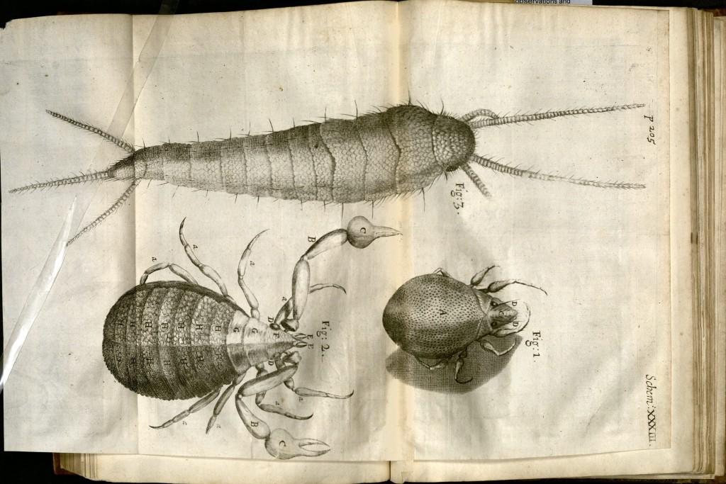 Robert Hooke, Micographia, schem XXXIII (EC65 H7636 665maa)