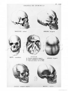 lombroso_skulls