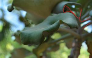 leaves_edited