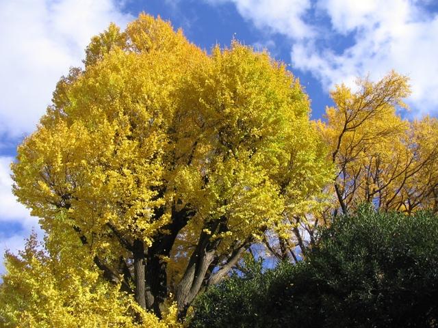 Japan 2006 296.jpg