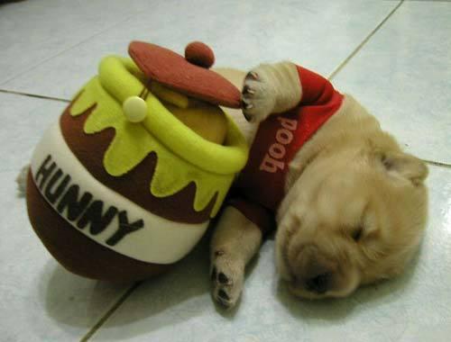 cute_puppy_pooh-thumb.jpg