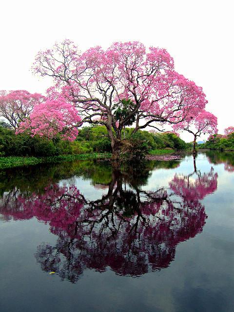mirrortree