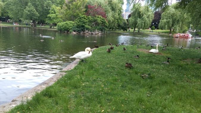 common park boston