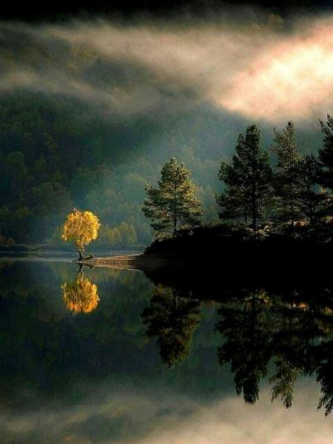 goldentreereflect
